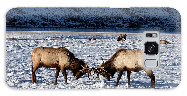Young Bull Elk In Jackson  Hole In Wyoming Galaxy Case by Carol M Highsmith