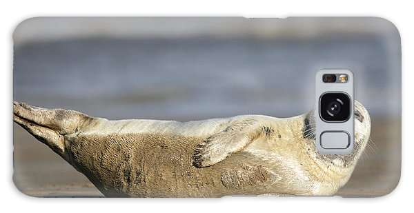Young Common Seal Sleeping On The Beach Galaxy Case