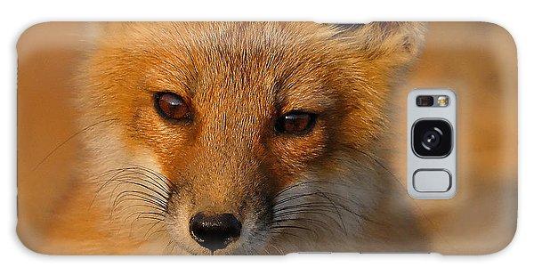 Young Fox Galaxy Case