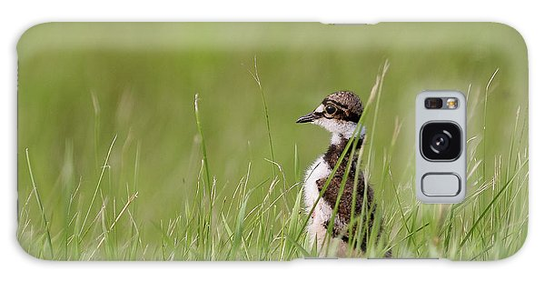 Killdeer Galaxy Case - Young Killdeer In Grass by Mark Duffy