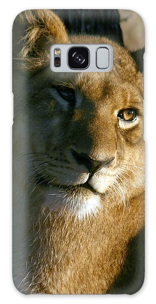 Young Lion Galaxy Case