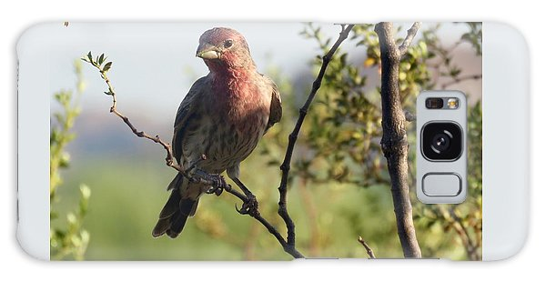 Young Male House Finch Galaxy Case