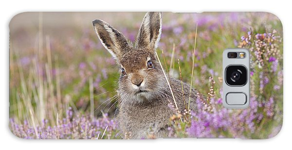 Young Mountain Hare In Purple Heather Galaxy Case