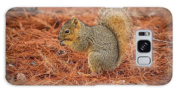 Yum Yum Nuts Wildlife Photography By Kaylyn Franks     Galaxy Case