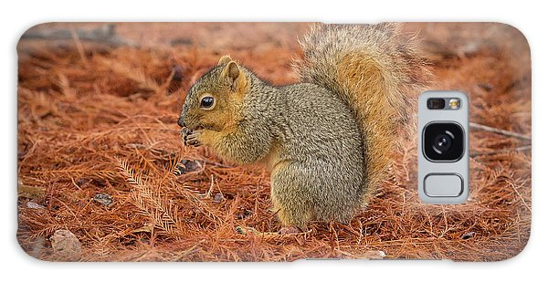 Yum Yum Nuts Wildlife Photography By Kaylyn Franks     Galaxy Case