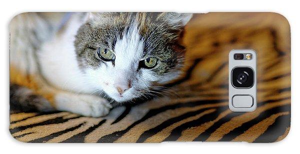 Zebra Cat Galaxy Case