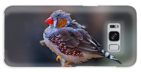 Zebra Finch Galaxy Case