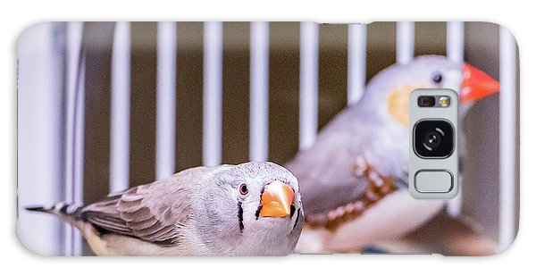 Zebra Finch Pair Galaxy Case
