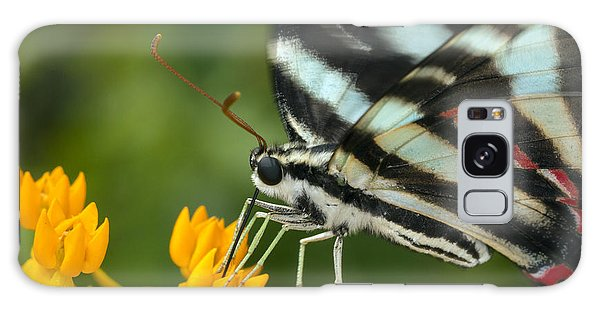 Zebra Swallowtail Drinking On The Fly Galaxy Case