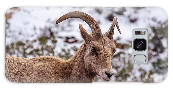 Zion Bighorn Sheep Close-up Galaxy Case