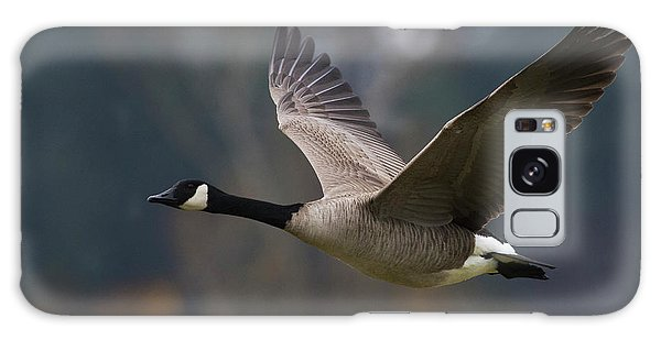 Canada Goose Galaxy Case - Canada Goose Flying by Ken Archer