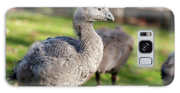 Cape Barren Goose And Geese Galaxy Case