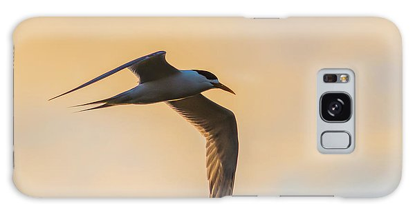 Crested Tern In The Early Morning Light Galaxy Case