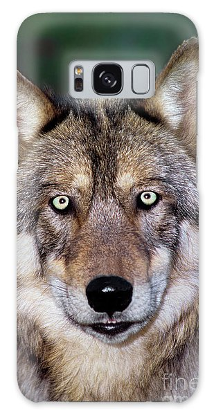 Gray Wolf Portrait Endangered Species Wildlife Rescue Galaxy Case
