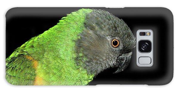Senegal Parrot Galaxy Case