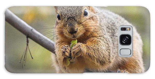 Snacking Squirrel Galaxy Case