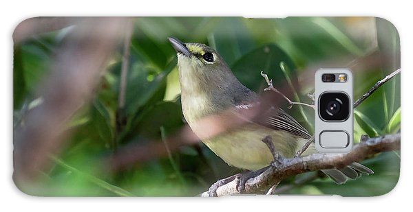 Thick-billed Vireo Galaxy Case