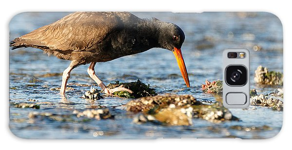 Black Oystercatcher Pacific Coast Galaxy Case