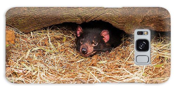 Galaxy Case featuring the photograph Tasmanian Devil In Hobart, Tasmania. by Rob D