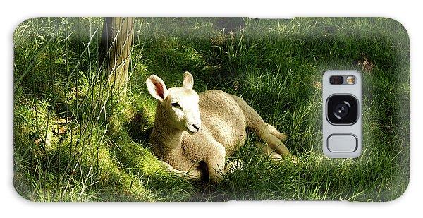 20/06/14  Keswick. Lamb In The Woods. Galaxy Case