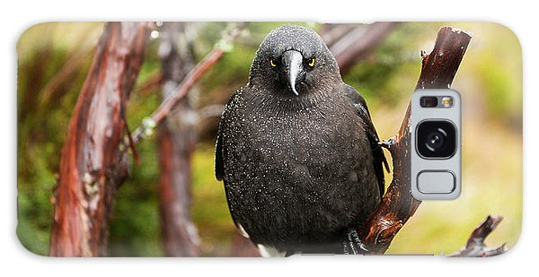 Galaxy Case featuring the photograph Black Currawong Resting On A Tree Branch by Rob D