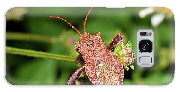 Leaf Footed Bug Galaxy Case