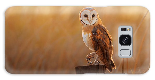 Perches Galaxy Case - A Beautiful Barn Owl Perched On A Tree by Duangnapa b