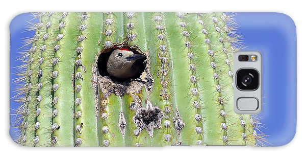 Southwest Usa Galaxy Case - A Gila Woodpecker Sticking Its Head Out by Kojihirano