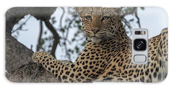 A Leopard Gazes From A Tree Galaxy Case