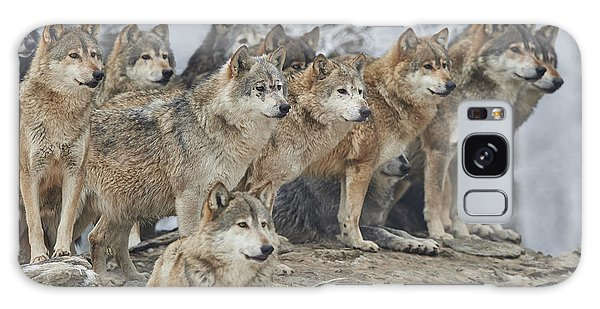 Alaska Galaxy Case - A Pack Of Wolves In Snow by Michael Roeder
