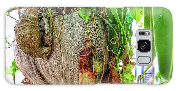 A Pitcher Plant On Our Terrace In Thailand Galaxy Case