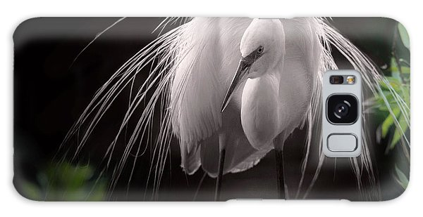 A Touch Of Class - Great Egret With Plumage Galaxy Case