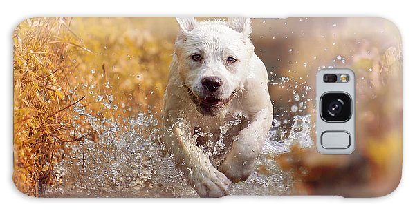 Drop Galaxy Case - A Young Labrador Retriever Dog Is by Manushot