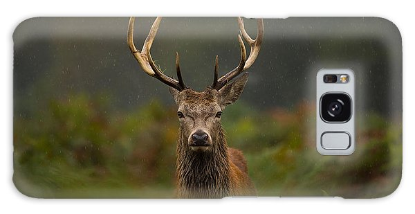 Scottish Galaxy Case - A Young Red Deer Stag by Andrew Swinbank