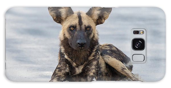 African Wild Dog Resting On A Road Galaxy Case