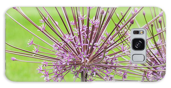 Schubert Galaxy Case -  Allium Schubertii Flower by Tim Gainey
