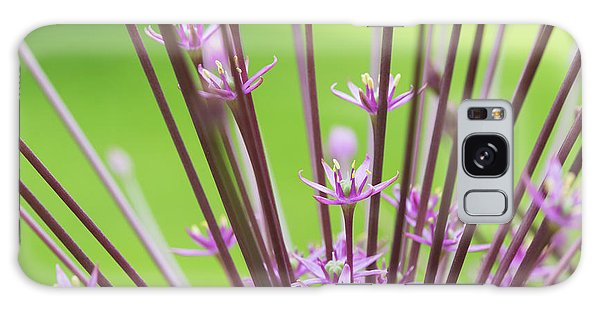 Schubert Galaxy Case -  Allium Schubertii Flowering by Tim Gainey