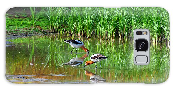 American Avocets Galaxy Case
