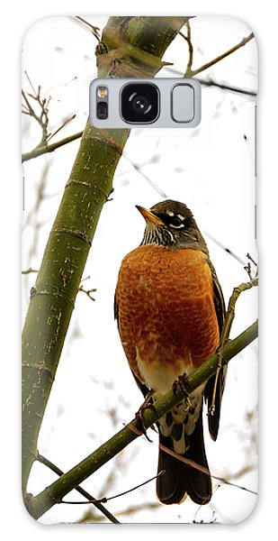 American Robin Perching In A Wintertime Tree Galaxy Case