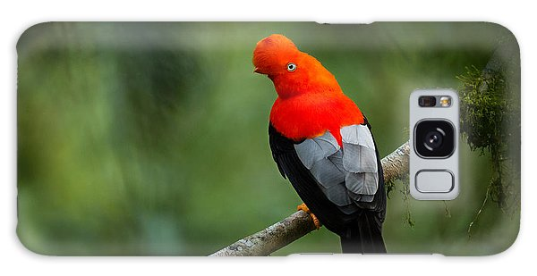 Perches Galaxy Case - Andean Cock-of-the-rock In The by Photocechcz