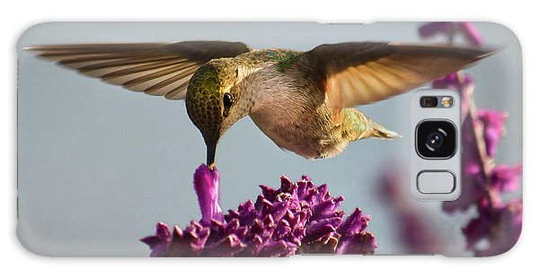 Anna's Hummingbird Sipping Nectar From Salvia Flower Galaxy Case