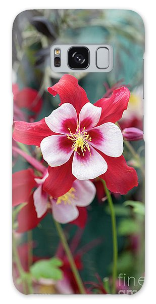 Aquilegia Galaxy Case - Aquilegia Swan Red And White Flower by Tim Gainey