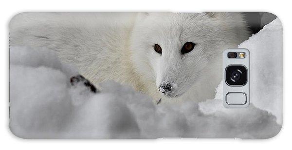 Artic Fox Galaxy Case