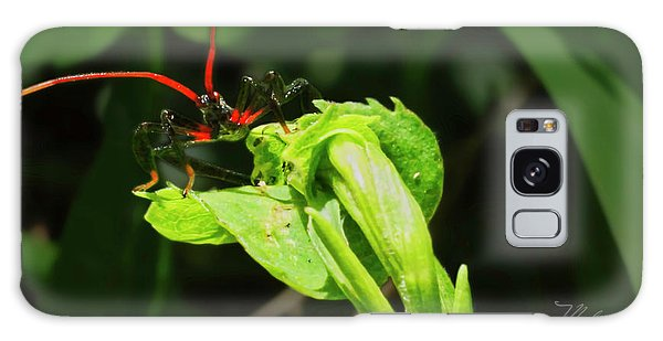 Assassin Bug Galaxy Case