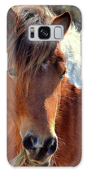 Galaxy Case featuring the photograph Assateague Pinto Mare Ms Macky by Bill Swartwout Fine Art Photography