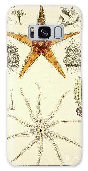 Feather Stars Galaxy Case - Asterias Aurantiaca And Comatula Carinata, From The Mollusca And Radiata by English School