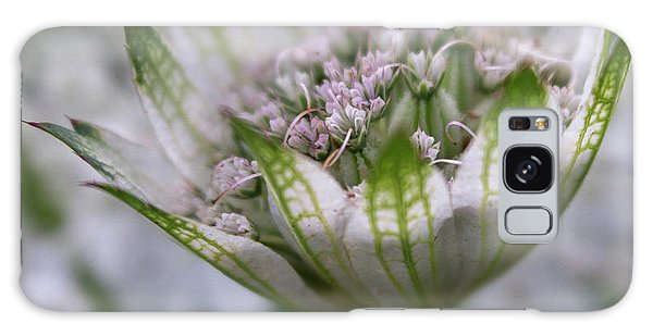 Astrantia Galaxy Case