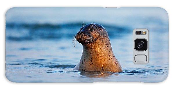 French Galaxy Case - Atlantic Grey Seal, Halichoerus Grypus by Ondrej Prosicky