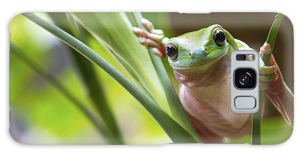 Horizontal Galaxy Case - Australian Green Tree Frog On A Leaf by Andrew Lam