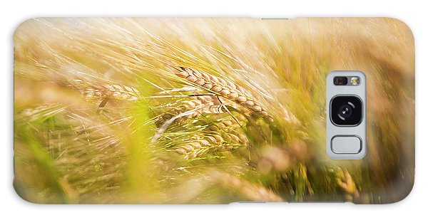 Background Of Ears Of Wheat In A Sunny Field. Galaxy Case
